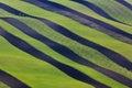 Wavy Green Fields.  Striped Ro...