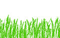 Wax crayon hand drawn green grass isolated on white. Seamless kid`s drawn background banner.