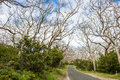 Way through bare trees eucalyptus in australia in early springtime Stock Photos