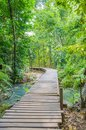 Way in forest wood path among the the emerald pool sra morrakot thailand Royalty Free Stock Photography