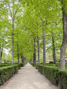 Way in the gardens of Aranjuez Stock Photo