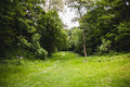 Way in green meadow Royalty Free Stock Photo
