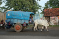 On the way home tirunelveli tamil nadu india circa an unidentified man and his ox cart leave town ox carts are a familiar vehicle Royalty Free Stock Photo