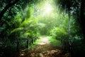 Způsob v džungle z Seychely