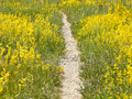 Way through meadow Royalty Free Stock Photo