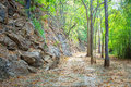 The way  through pass the green forest. Royalty Free Stock Photo