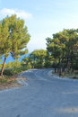 Way among pines landscape with a shaded asphalt road near the kamiros rhodes greece Stock Photos