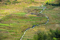 Way through the rice terraces in longsheng china people on beautiful rural landscape with Stock Photo
