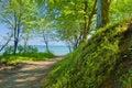 Manera en mar por verde bosque