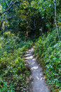 Way on tropical forest small old ground natural at mountain thailand Royalty Free Stock Image
