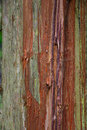 Weathered cedar bark that has been roughed up a little bit green and red with rough edges and texture Royalty Free Stock Photo