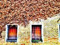Weathered wall and old barricaded windows with dry climbing ivy Stock Photos