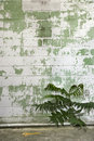 Weathered wall and plant. Stock Photos