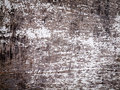 Weathered wood with flaking paint aged white Royalty Free Stock Image
