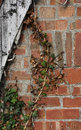 Weathered wood with ivy and brick wall texture color Stock Photos