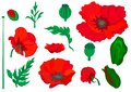 Web. Poppy. Beautiful bright realistic flowers of red color on a white background. Vector illustration.