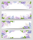 Web banners with lilac flowers. Vector eps-10. Royalty Free Stock Photo
