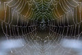 Web with drops of dew Royalty Free Stock Photo