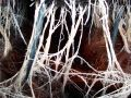 Web of Hydroponic Roots Royalty Free Stock Images