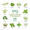 Web icon set of different spicy herbs