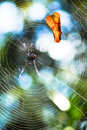 Web of spider is typically used to refer to a that is apparently still in use Royalty Free Stock Photos