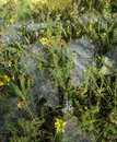 Webs in the morning Royalty Free Stock Photo