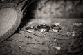 Wedding bands and Engagement Ring Royalty Free Stock Photo
