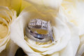 Wedding bands in rose Royalty Free Stock Photo