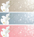 Wedding banners with calla lilies Stock Photo