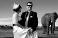 Wedding couple and african elephant shoot artistic black white photo of a posing with an elephants on their day bride looking at Royalty Free Stock Photography