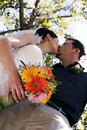 Wedding couple kissing Royalty Free Stock Photography
