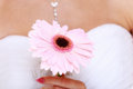 Wedding day pink flower in the hands of the bride gerbera daisy Royalty Free Stock Photography