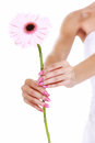 Wedding day pink flower in the hands of the bride gerbera daisy Royalty Free Stock Images