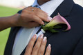Wedding detail bride arranging boutonniere flower on suit jacke groom Stock Photography