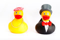 Wedding ducks two on a white background Stock Photo