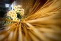 Wedding floreal decoration
