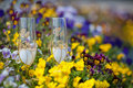 Wedding goblets among yellow and violet flowers Royalty Free Stock Images
