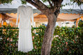 Wedding gown hanging on tree branch Stock Photos