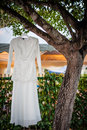 Wedding gown hanging on tree branch Stock Image