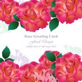 Wedding Invitation Card vector. Roses and lavender flowers. Red pink colors Royalty Free Stock Photo