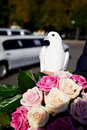 Wedding pigeon fortunately the groom and the bride Stock Photos