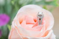 Wedding ring closeup of diamon Stock Photos