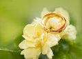 Wedding rings on abstract background closeup Stock Photos