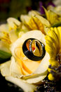 Wedding rings on the bouquet of a newly married couple Stock Photography