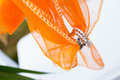 Wedding rings and fabric orange holds these on a special day for the bride groom Royalty Free Stock Image