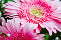 Wedding rings  on flowers Stock Image
