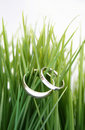 Wedding rings in the grass Royalty Free Stock Photos