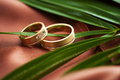 Wedding rings on green leaf Royalty Free Stock Image