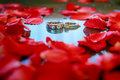 Wedding rings with petal  rose flower. - (Selective focus) Royalty Free Stock Photo