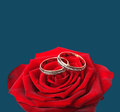 Wedding rings and on red roses Royalty Free Stock Photo